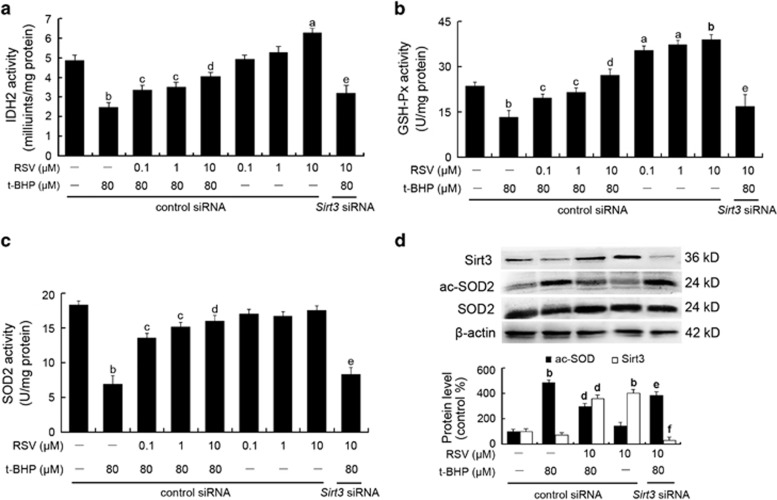 RSV reduced mtROS generation by stimulating Sirt3-mediated mitochondrial enzyme activities and SOD2 deacetylation. Cells were transfected with Sirt3 <t>siRNA</t> as described in the Materials and Methods section. At 24-h <t>post-transfection,</t> cells were pretreated with different concentrations of RSV (0.1, 1 and 10 μ M) for 2 h and then treated with or without t-BHP of 80 μ M for an additional 4 h. ( a – c ) The enzyme activities of IDH2 ( a ), GSH-Px ( b ) and SOD2 ( c ) were determined using the corresponding assay kits, according to the manufacturer's instructions. ( d ) After the indicated treatments, the cells were harvested and lysed to detect protein levels of ac-SOD2 by western blot analysis. All results are presented as means±S.E.M. of at least three independent experiments. a P