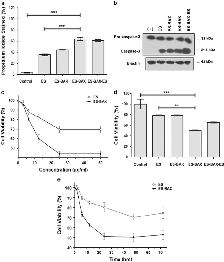 Effect of ES, ES-BAX, ES-BAK, and ES-BAX-ES on endothelial cells. ( a ) C-PAE cells were incubated in the presence or absence of 20 μ g/ml of either protein for 16 h. The cells were trypsinized and stained with propidium iodide. Fluorescence of individual nuclei was measured by flow cytometry. Each sample was analyzed in triplicate. Error bars: mean±S.E.M. The statistical significance of differences between the groups was assessed with one-way ANOVA with Bonferroni post-test, *** P