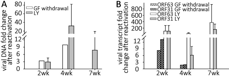 Reactivation stimuli increase the number of VZV genomes and transcripts in quiescently-infected human neurons. Wells of quiescently infected neurons were induced to reactivate VZV using growth factor withdrawal (GF n = 2 for each time point) or treatment with PI3K inhibitor LY294002 (LY) 2, 4, or 7 weeks (n = 5 for each time point) after infection. DNA and RNA were extracted from the wells and VZV genomes (A) and transcripts (B) of ORF63 and ORF31 were quantified. Both treatments increased the levels of both viral genomes and transcripts to varying degrees at all time points tested, indicating at least a partial reactivation of VZV. In all experiments reactivating VZV with LY, changes in nucleic acid levels measured were statistically significant.