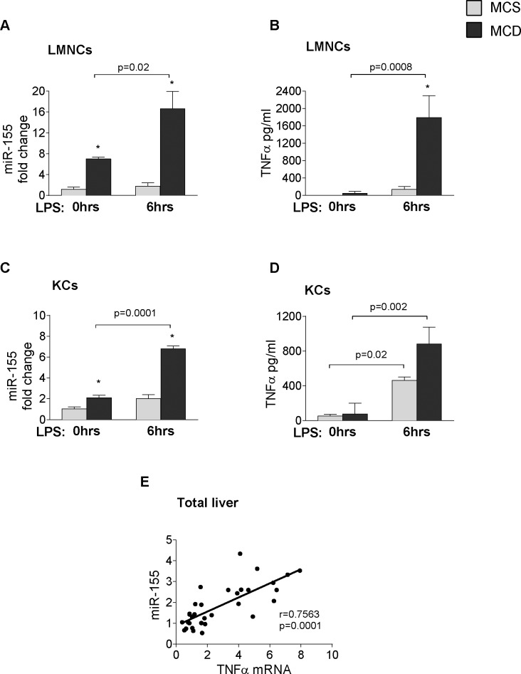 LPS induces miR-155 and <t>TNFα</t> expression in hepatic immune cells. Isolated LMNCs and Kupffer cells from C57Bl/6 WT mice were stimulated or not with 100ng/ml LPS for 6 hours in vitro. miR-155 expression (A: LMNCs, C: KCs) and TNF-α protein secretion (B: LMNCs, D: KCs) were measured in the cells and in the supernatant, respectively (n = 8-10/group). RNA was isolated from C57Bl/6 WT mice fed with methionine-choline deficient (MCD) or supplemented (MCS) control diet for 3, 6 and 8 weeks. miR155 and TNFα mRNA expression was determined (n = 5-6/group, total 32) and correlation was plotted (E); correlation coefficient is shown. (*) indicates p