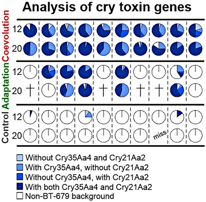 Frequency of BT-679 toxin genes cry21Aa2 and cry35Aa4 among the evolved replicate populations. The different shades of blue indicate alternative combinations of toxin genes present, as indicated. The toxin genes were all restricted to evolved clones of the BT-679 background (i.e., horizontal transfer was not detected). The top two rows refer to the coevolved, the middle two rows to one-sided adapted, and the bottom two rows to the control evolved replicate populations. Replicate populations are given along the horizontal axis. Data is shown for both transfer 12 and 20 and a total of 55 replicate populations. Crosses indicate extinction of replicates and