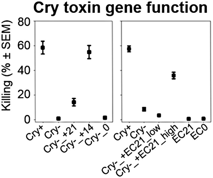 Virulence of BT-679 pathogens with or without nematocidal toxin genes. Mean virulence of plasmid-lacking BT-679 (Cry-) with reintroduced Cry14Aa1 (+14) or Cry21Aa2 (+21; left panel) or two concentrations of Cry21Aa2-expressing E . coli (+EC21_low, +EC21_high; right panel). Cry+, toxin gene plasmid-bearing BT-679; Cry-_0, empty vector control for BT-679; EC0, empty vector control for E . coli . The data is provided in S6 Data .