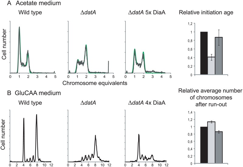 DiaA can hold back premature and rifampicin resistant initiations. Flow cytometry DNA histograms of wild type cells (MG1655 with pACYC184, IF26) (left histogram), Δ datA cells with pACYC184 (IF104) (middle histogram) and Δ datA cells with pACYC184 diaA (IF105) (right histogram) grown in acetate medium (A) or GluCAA medium (B). For the cells grown in acetate DNA histograms of exponentially growing cells are shown, while for the cells grown in GluCAA the rifampicin run-out histograms are shown. See legend to Fig 1 for further details. For the cells grown in acetate the initiation ages of the Δ datA cells without (light grey bar) or with (dark grey bar) extra DiaA relative to the wild type control (black bar) are shown in the bar histogram in the rightmost panel. The values are an average of three experiments and the error bars represent the standard deviation. For the cells grown in GluCAA the average number of chromosomes for the Δ datA cells without (light grey bar) or with (dark grey bar) extra DiaA relative to the wild type control (black bar) are shown in the bar histogram in the rightmost panel. The values are an average of three experiments and the error bars represent the standard deviation.