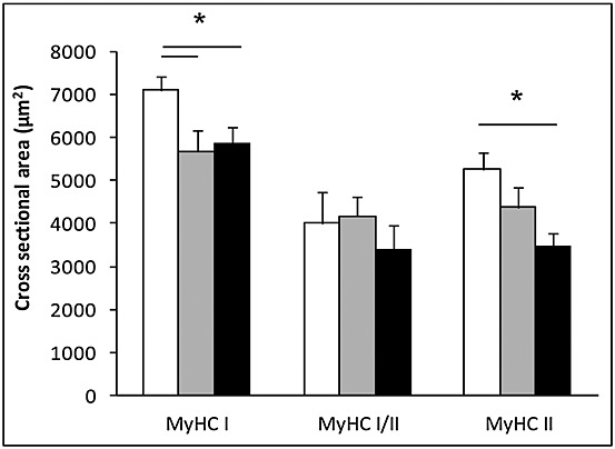 Muscle fibre atrophy is independent of fibre type in lung cancer cachexia . Cross-sectional of individual muscle fibres was assessed using immunohistochemical staining of laminin. Assessment of fibres expressing different myosin heavy chain isoforms was performed using immunohistochemistry and myosin adenosine 5′-triphosphatase staining.