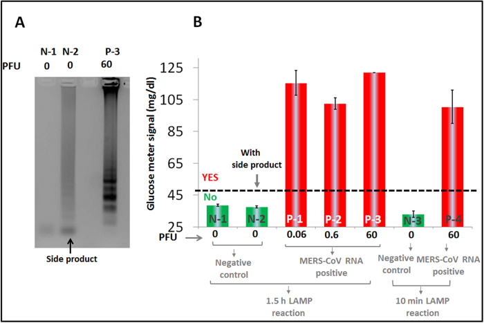 Detection of MERS-CoV RNA from tissue culture-derived virions through reverse transcription and LAMP amplification (RT-LAMP). ( A ) Agarose gel electrophoretic characterization of RT-LAMP amplicons from samples containing RNA extracted from 60 PFU of MERS-CoV virons (or 2 μL 3E4 PFU/mL) (P-3) or samples lacking MERS-CoV RNA (N-1 and N-2). For each sample, the LAMP reaction was carried out at 55 o C for 1.5 hours and developed on a 1% agarose gel stained with ethidium bromide. ( B ) Glucometer responses for amplification reactions with RNAs extracted from 0.06 (P-1), 0.6 (P-2), 60 (P-3 and P-4) PFU MERS-CoV virions (2 μL) and with RNA-negative samples (N-1, N-2, and N-3). Samples underwent 1.5 hour or 10 min 55 o C RT-LAMP reactions, 1 hour 25 o C OSD, and 23 min 55 o C glucose generation with thermostable TmINV. The signals shown in N-1, N-2 and P-3 in Fig 3B were obtained from the same RT-LAMP reactions as the N-1, N-2, and P-3 samples shown in Fig 3A . It should be noted that the LAMP reaction for sample N-2 produces non-specific amplicons but these do not produce a false positive glucometer signal. The error bars represent standard deviations calculated from three parallel assays.