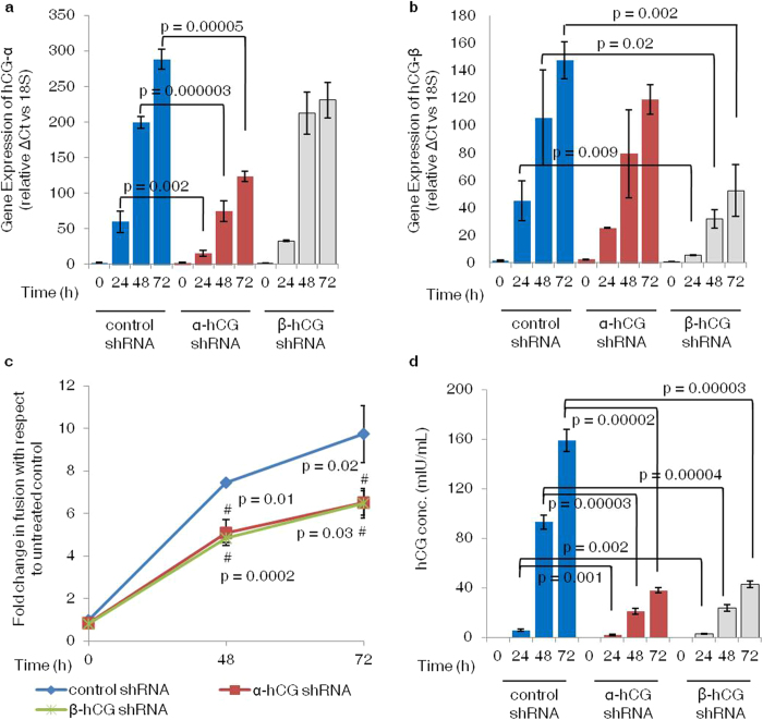 Effect of α- and β-hCG silencing on forskolin mediated syncytialization of BeWo cells. BeWo cells knockdown for α- and β-hCG were made using lentiviral shRNA as described in Methods . Efficacy of silencing of α- and β-hCG transcript was confirmed by qRT-PCR using specific primers and secreted hCG by ELISA. The effect of α- and β-hCG silencing on fusion was studied at 48 and 72 h of forskolin (25 μM) treatment by desmoplakin I + II staining. Panels ( a ) and ( b ) show qRT-PCR data comparing transcript levels of α- and β-hCG respectively, in control, α- and β-hCG silenced cells on foskolin treatment. Each bar represents relative ΔCt values after normalization with the 18 S rRNA, expressed as mean ± s.e.m. of three independent experiments performed in triplicates. Panel ( c ) compares the fold change in fusion on treatment with forskolin (25 μM) in control and α- and β-hCG silenced BeWo cells when compared with their respective untreated controls at 48 and 72 h. Values are shown as mean ± s.e.m. of three independent experiments. Panel ( d ) shows hCG secreted by control, α- and β-hCG silenced cells in response to forskolin treatment and represented as mean ± s.e.m. of three independent experiments performed in duplicates. # p