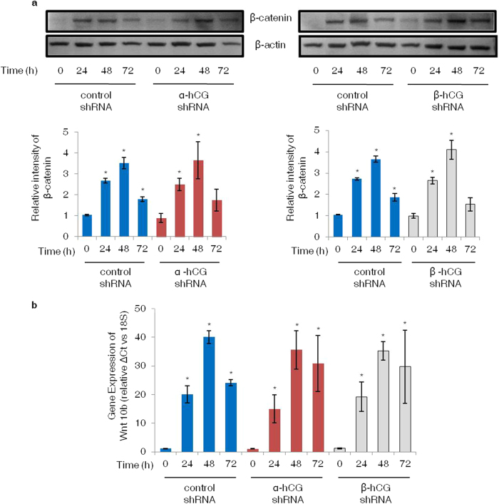 Expression profiles of β-catenin and transcript for Wnt 10b in α- and β-hCG silenced BeWo cells treated with forskolin. Control and α- and β-hCG silenced BeWo cells were treated with forskolin (25 μM) for 24, 48 and 72 h; cell lysates for Western blotting and total RNA for qRT-PCR were processed as described in Methods . Panel (a) shows densitometeric plots of β-catenin with β-actin used as an internal control. Data is represented as mean ± s.e.m. of at least three experiments. Representative blots for the same are also shown. Panel (b) represents Wnt 10b transcript profile at varying time points in the control and α- and β-hCG silenced BeWo cells. Each bar represents relative ΔCt values after normalization with the 18S rRNA, expressed as mean ± s.e.m. of three independent experiments performed in triplicates. *p