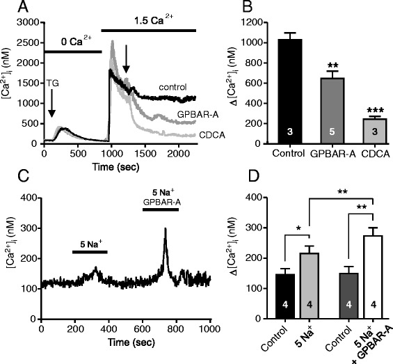 Effect of the TGR5 ligands on [Ca 2+ ] i transients in duct epithelia. Capan-1 cells were incubated with nominal 0 mM Ca 2+ buffer ( a , b ) and thapsigargin (1 μM) to deplete intracellular Ca 2+ stores. Thereafter, cells were gently perfused with physiological buffer to refill intracellular Ca 2+ stores and after the fluorescence was relatively stable, solutions were changed to GPBAR-A (30 μM), CDCA (0.3 mM), or control. c , d The contribution of the sodium-calcium exchanger (NCX) was tested. Cells were perfused with 5 mM Na + buffer which increased [Ca 2+ ] i and this response was potentiated in the presence of GPBAR-A (30 μM). b , d Summary of data given as mean values ± SEM of 7–15 cells per each independent experiment (n). *= P
