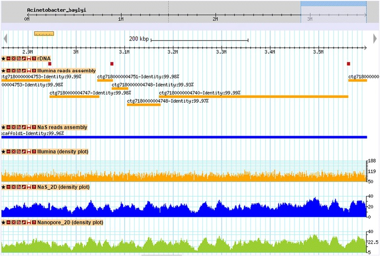 Comparison of Illumina and NaS reads assemblies. The figure shows a capture of a 700 kb genomic region from Acinetobacter baylyi ADP1 . The first track contains rDNA clusters 5, 6 and 7 (purple rectangles). The orange rectangles represent alignments of contigs from the Illumina-only assembly, whereas blue rectangle represents the alignment of the NaS assembly contig. The three plots represent respectively the coverage of Illumina, Nas 2D and MinION® 2D reads. We observed that breakpoints of the Illumina assembly coincide in part with rDNA clusters, in contrast with the NaS assembly which exhibits a perfect alignment.