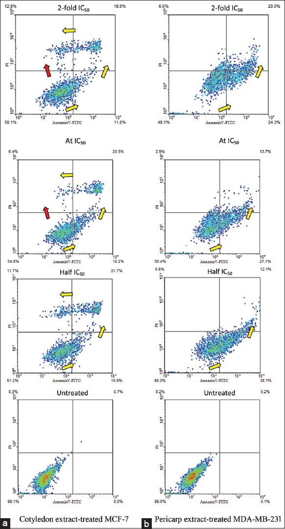 Scatter plots indicative of apoptotic patterns for (a) MCF-7 cells untreated and treated with cotyledon extract, and (b) MDA-MB-231 cells untreated and treated with pericarp extract of Vatica diospyroides type SS fruit. Treatment dose levels were half 50% growth inhibition concentrations (IC 50 ), IC 50 and 2-fold IC 50 , for 24 h. The cells were stained with AnnexinV-FITC/PI and analyzed by flow cytometry. Viable, early apoptotic, late apoptotic, and nonviable cells are positioned in the lower left, lower right, upper right and upper left segments of the diagram. Yellow arrows indicate apoptotic progression of cells, whereas red arrow shows necrotic transition. Five thousand events were counted in each assay