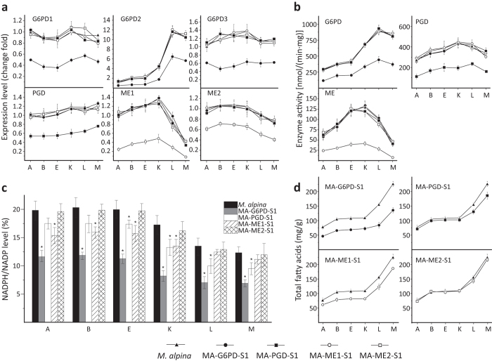 Effect of RNAi targeting G6PD, PGD and ME, in M . alpina . The expression level ( a ), enzymatic activity ( b ), NADPH level ( c ) and total fatty acid level ( d ) in M. alpina strains after RNAi targeting ME, G6PD and PGD. M. alpina (up-triangles), wild type M. alpina . MA-ME1-S1 (open circle), M. alpina malic enzyme 1 silenced strain; MA-ME2-S1 (open squar e), M. alpina malic enzyme 2 silenced strain; MA-G6PD-S1 (circles), M. alpina glucose-6-phosphate dehydrogenase co-silenced strain; MA-PGD-S1 (squares), M. alpina phosphogluconate dehydrogenase silenced strain. Strains were cultured and sampled as performed in the transcriptome experiment above. Three independent experiments were performed, and the error bars represent standard deviations. * p