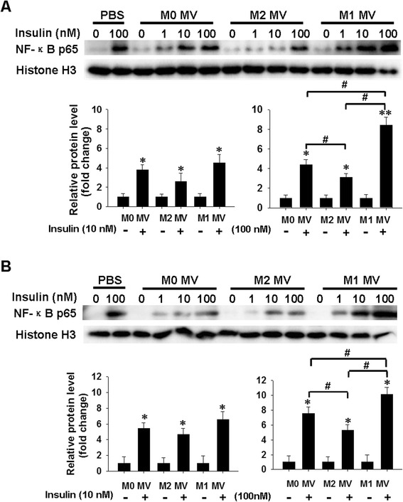 Effect of macrophage-derived MVs on insulin-stimulated activation of NF-κB in human adipocytes. a , b . Relative protein levels of nuclear NF-κB p65 in human mature adipocytes ( a ) and differentiated cells ( b ) were analyzed by western blotting. Human adipocytes were treated with indicated MVs for 24 h, and then incubated with 0, 1, 10, or 100 nM of insulin for 20 min. NF-κB p65 and histone H3 levels in nuclear lysates were determined by immunoblotting. Quantification of NF-κB p65 protein level is shown below. Western blot images were analyzed using Bandscan software, and statistical analysis is presented below. * P
