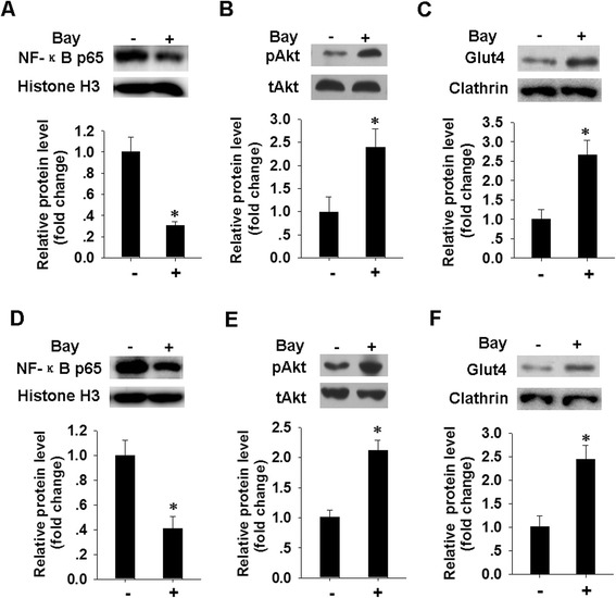 Blocking of NF-κB reverse the inhibitory effect of M1 MVs on pAkt level and GLUT4 translocation in human adipocytes. a , d . Expression level of nuclear NF-κB p65 in human mature adipocytes ( a ) and differentiated cells ( d ) were analyzed by western blotting. Adipocytes were pretreated with or without NF-κB specific inhibitor (Bay, 10 μM) for 2 h, then incubated with M1 MVs for 24 h. Nuclear lysates were analyzed for NF-κB p65 and histone H3 level after insulin stimulation for a further 20 min. Quantification of NF-κB p65 protein level is presented below. b , e . Protein level of pAkt in human mature adipocytes ( b ) and differentiated adipocytes ( e ), after treatment as in a . Western blot images were analyzed using Bandscan software, and statistical analysis is presented below. c , f . The levels of GLUT4 in plasma membrane (PM) fractions of human mature adipocytes ( c ) and differentiated adipocytes ( f ) were determined by western blotting. Cells were treated as in A, and PM fractions were obtained and subjected to immunoblotting with the indicated antibodies. Quantification of the GLUT4 protein level is shown below. * P