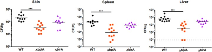 F. novicida BplA is required for replication in mice. Mice were infected subcutaneously with 1 × 10 5 CFU of wild-type F. novicida U112 (WT) or the Δ bplA or Δ birA strain. At 48 h postinfection, skin samples obtained at the site of infection as well as the spleen and liver were harvested, and CFU were enumerated after plating. ***, P