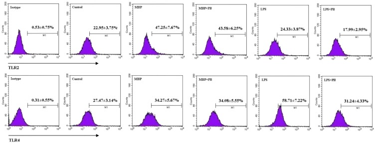 Effects of MBP on expression of TLR2 and TLR4 in RAW264.7 macrophages. RAW264.7 cells were treated with 5 μg/mL of MBP or 1 μg/mL of LPS for 48 h in the presence or absence of 5 μg/mL of polymyxin B (PB). Expression of TLR2 and TLR4 was analyzed by flow cytometry. Representative flow plots are shown, and results from three independent experiments are presented as mean ± SD.