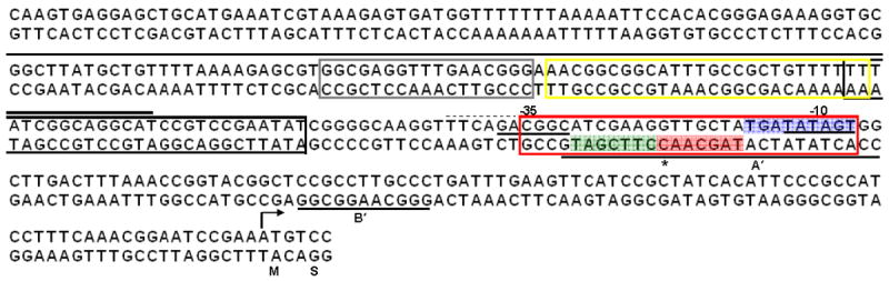The nucleotide sequence upstream of glnE and MtrR-binding sites. The 301 bp sequence of the DNA upstream of glnE and the first two codons (encoding M and S, respectively) is shown with the annotated −10 and −35 hexamer sequences of the glnE promoter identified by a line under the sequences. The putative extended −10 element is shown in blue. The alternative −35 hexamer is shown by the dashed line above the sequence. The boxed regions represent predicted MtrR binding sites that were identified based on sequence similarity to that of a site upstream of mtrCDE [ 8 , 10 ] or rpoH [ 7 ]. The grey box represents a sequence with 53% identity to the region upstream of rpoH [ 7 ] while the yellow, black, and red boxes represent sequences with 55%, 67%, and 52%, respectively, identity to regions upstream of mtrCDE [ 8 , 10 ]. The MtrR-binding sites identified by DNase I protection ( Figure 3 ) are noted by the solid line above the sense strand or below the anti-sense strand; the two sites on the anti-sense strand are denoted as A′ and B′ with the DNase I hypersensitive site in A′ shown by an *. The adjacent seven nucleotide imperfect inverted element is shown in green and red.