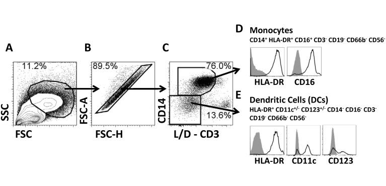 Gating strategy. Stained PBMC were gated on cells with high FSC and SSC characteristics avoiding the lymphocyte region (A), doublets/multiplets were eliminated (B) and subsequently live cells were gated based on expression of CD14 (C). The viability channel (live/dead-L/D-) also contained CD3; therefore cells selected were also CD3 - (C). CD14+ cells also expressed CD16 and HLA-DR. Therefore, these cells were classified as monocytes (D). All CD3 - CD14 - expressed HLA-DR and a percentage of these cells expressed either CD11c or CD123 but lacked CD19, CD66b, CD16 and CD56; therefore, these cells were classified as dendritic cells (DC) (E) (see also S4 Fig ). The identity of these cells as DCs was confirmed using PBMC from healthy volunteers stained with monoclonal antibodies to BDCA-1, BDCA-2 and BDCA-3 ( S4 Fig ). Plots shown are from a representative volunteer. Gray histograms represent fluorescent minus one (FMO) samples.