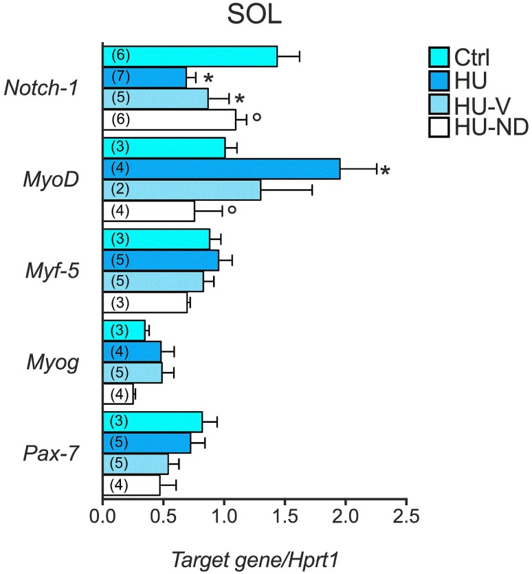 Effects of Nandrolone (ND) treatment on the expression level of genes involved in the regenerative pathways in Soleus muscle of HU mice. Histograms show quantification of transcript levels performed with real time PCR, for Notch-1 , MyoD , Myf5 , Myogenin , Pax7 genes normalized by the Hprt1 gene, in the 4 experimental groups (Ctrl, HU, HU-V, HU-ND). Each bar represents the mean ± S.E.M. from the number of animals as indicated in the brackets above the bars. Statistical analysis was performed for each muscle type using ANOVA followed by Fisher t-test *vs Ctrl, °vs HU (at least P