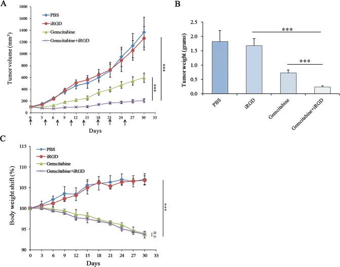 Therapeutic efficacy of <t>Gemcitabine</t> combined with iRGD for human NSCLC xenografts. (A) The tumor volume curve during treatment. Arrows indicate the time of injection. The day when treatment started was recorded as day 0. Tumor volume was measured once every three days until day 30. (B) Average tumor weight of each group at the end of treatment. (C) The body weight shift curve of the mice during the experiment. n = 6. Error bars, mean ± SD; ns, not significant; *** p