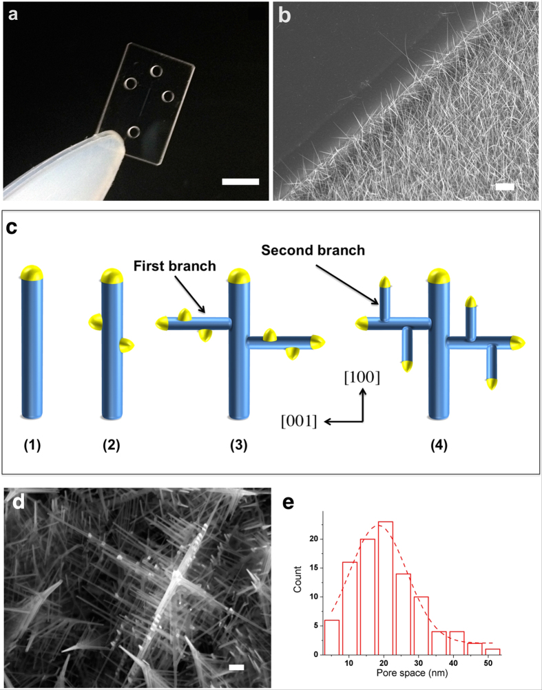 3D nanowire structures. ( a ) Photograph of a device for the 3D nanowire structures; scale bar 5 mm. ( b ) SEM image of SnO 2 nanowires embedded in a microchannel; scale bar 1 μm. ( c ) Schematic of Au catalyst assisted VLS 3D nanowire growth; nanowire backbone were growth in [100] direction (1), then Au catalyst decorate along nanowire backbone (2), after that, the first nanowire branches growth in [001] direction (3), Au catalysts were deposited on the first nanowire branches and the second nanowire branches were growth by VLS technique as a cycle (4). ( d ) SEM image of the 3D nanowire structures; scale bar 100 nm. (e) Pore size distribution in the 3D nanowire structures.