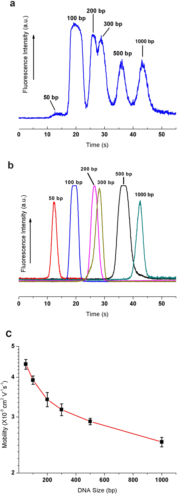 Separation and mobility of DNA molecules in the 3D nanowire structures. ( a ) Separation of 50 bp (40 ng/μL), 100 bp (30 ng/μL), 200 bp (30 ng/μL), 300 bp (30 ng/μL), 500 bp (30 ng/μL) and 1000 bp (30 ng/μL) molecules in the 3D nanowire structures. The electropherograms were obtained at 500 μm from the entrance of the 3D nanowire structures. The applied electric field in the separation channel was 100 V/cm. ( b ) The electropherogram of each type of DNA molecule to verify the migration time of each separation peak ( E = 100 V/cm, L = 500 μm). ( c ) Semi-log plot of electrophoretic mobility as a function of DNA size under the applied electric field of 100V/cm.