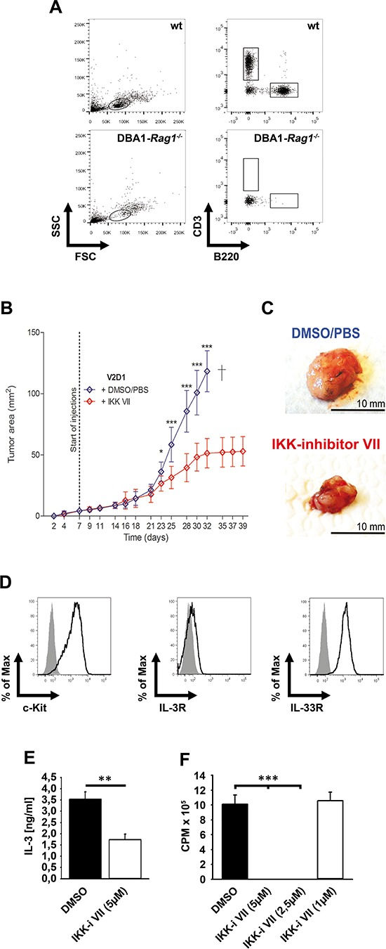 <t>IKK</t> inhibition reduced growth of V2D1 tumors (A) Blood from wt or DBA1- Rag1 −/− -mice was analyzed for CD3 and B220. (B) V2D1-cells (1 × 10 6 ) were injected subcutaneously into the flanks of DBA/1- Rag1 −/− -mice and tumor area was assessed for 6 weeks using a Mitutoyo Quick Mini caliper. Growing tumors were either treated with DMSO/PBS (blue line) or with IKK-inhibitor <t>VII</t> (red line) (25 μM). [Data represent the mean SD of 10 mice with tumors ( p