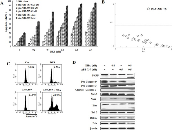 ABT-737 combined with DHA synergistically induce apoptosis in U937 cells U937 cells were treated with ABT-737 (0.125 to 2 μM), DHA (0.2 to 2.4 μM) or their combinations at different ratios for 24 h. Apoptotic cells were quantified based on morphologic changes by microscopic detection of AO/EB-stained cells (A). The nature of interaction between ABT-737 and DHA was characterized by median dose effect analysis using CompuSyn software. CI values of less than 1.0 (horizontal line) correspond to a synergistic interaction. Fa on the x- axis denotes the fraction affected (B). U937 cells were treated with 0.5 μM ABT-737, 0.8 μM DHA and their combination for 24 h. The apoptotic cells were determined by FACS after staining with annexin V-FITC (C) and the relative levels of indicated proteins were determined by Western blotting using specific antibodies (D).