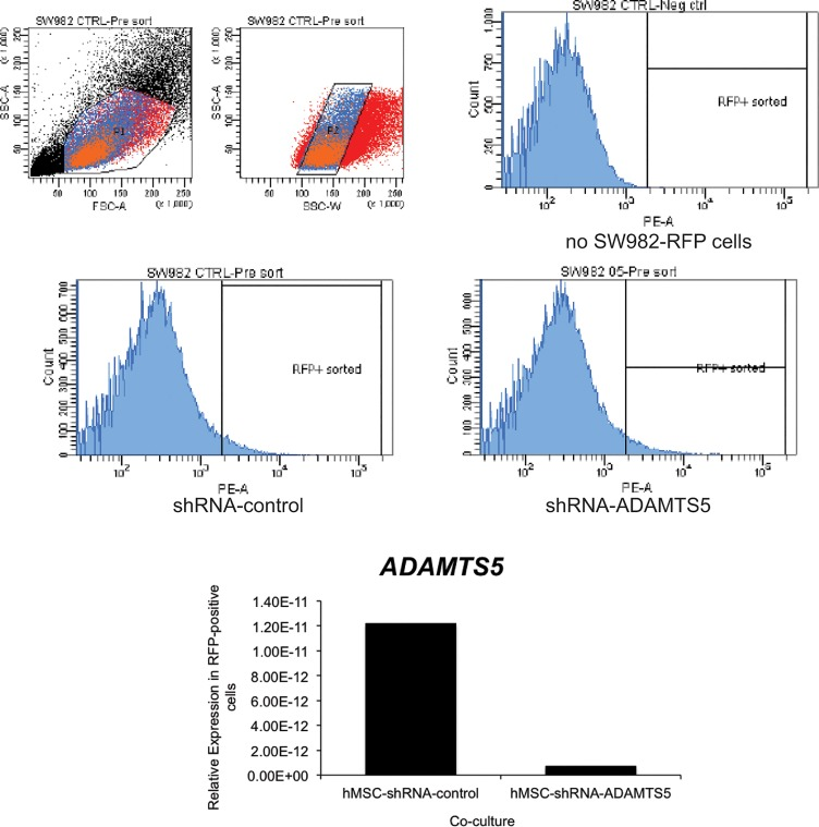 Co-culture of hMSCs transduced with ADAMTS5-targeting shRNA effectively reduces ADAMTS5 expression in flow cytometry sorted RFP-labeled SW982. (A) Following co-culture of non-targeting control shRNA or ADAMTS5-targeting shRNA transduced hMSCs with RFP labeled SW982 cells, the cells were sorted by flow cytometry. The gating threshold (RFP+ sorted) was set based on the analysis of co-cultured hMSCs with unlabeled SW982 cells (no SW982-RFP cells). RFP-positive SW982 cells that were co-cultured with hMSCs previously transduced with non-targeting control-shRNA or ADAMTS5-targeting shRNA were sorted directly into <t>TriPure</t> reagent for <t>RNA</t> isolation. (B) The histogram shows the relative gene expression for ADAMTS5 in the RFP-positive cell population isolated after co-culture with hMSC-shRNA-control or hMSC-shRNA-ADAMTS5 cells as determined by quantitative real time RT-PCR. The result is from a representative experiment.