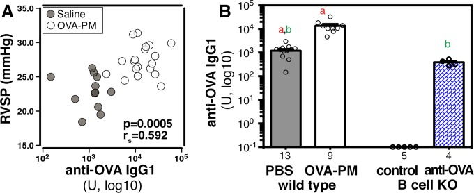 OVA-specific IgG1 serum levels in sensitized wild type mice and in B cell KO mice following reconstitution with monoclonal anti-OVA IgG1 antibody. OVA-specific IgG1 levels were measured in sera of sensitized wild type mice that were either challenged intranasally with saline or OVA-PM, and in sera of sensitized B cell KO mice that were either controls or injected with anti-OVA IgG1 antibody. (A) Correlation of IgG1 serum titers with right ventricular systolic pressures in sensitized wild type mice. Values for P and rs (tie corrected, Spearman's rank correlation test) are indicated. (B) Bar graphs show (mean ± SEM) and individual data points of OVA-specific IgG1 levels. Pairs of letters above the bars indicate the pairs of groups that showed significant differences (p
