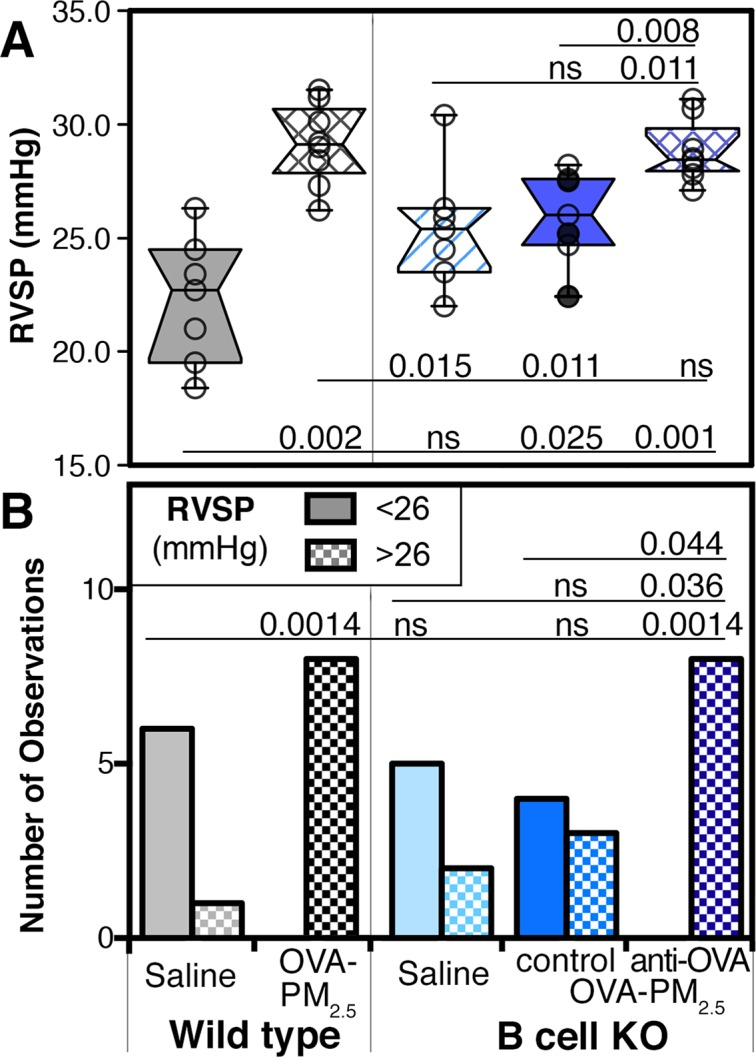 Right ventricular systolic pressures in wild type and B cell KO mice. Wild type and B cell KO mice were challenged with saline, or antigen and PM 2.5 (OVA-PM 2.5 ) intranasally. Data were pooled from 3 experiments; circles represent the data from individual mice, n = 7–8 per group. OVA-PM 2.5 challenged B cell KO control mice were injected with control antibody (open circles) or given no injections (filled circles). Another group of B cell KO mice was injected with antigen specific IgG1 (anti-OVA monoclonal). Right ventricular systolic pressure (RVSP, mmHg) data are shown as box plot of the medians (A) or as bar graph of the numbers of mice with RVSP less or greater than 26 mmHg (B) . The left-most beginning of each horizontal line indicates the group with which pairwise comparisons were made using the Mann-Whitney U test (A) or Fisher's exact test (B) . Significant P values (P