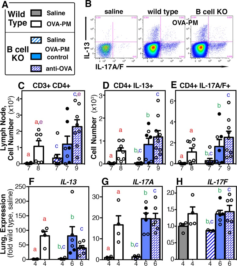 IL-13 IL-17A response to exposure with OVA-PM 2.5 in wild type and B cell KO mice. Lymph node and lung tissues from groups of wild type or B cell KO mice challenged with saline or OVA-PM were analyzed. Groups of OVA-PM challenged B cell KO mice were either controls [injected with control antibody (open circles) or given no injections (filled circles)] or injected with anti-OVA IgG1 antibody. (A) Legend. (B) Representative dot plots were generated by flow cytometry of CD4+ T cells (CD3-CD4-dual-positive) showing staining for IL-13 vs. IL-17A. (C-E) The flow cytometry data were numerically analyzed to calculate the numbers for each cell type (mean ± SEM) per lung draining lymph node. (F-H) Gene expression in the lungs of IL-13, IL-17A, IL-17F is indicated (mean ± SEM) as fold-increase over the means of the wild type saline group. Pairs of letters above the bars indicate the pairs of groups that showed significant differences (p