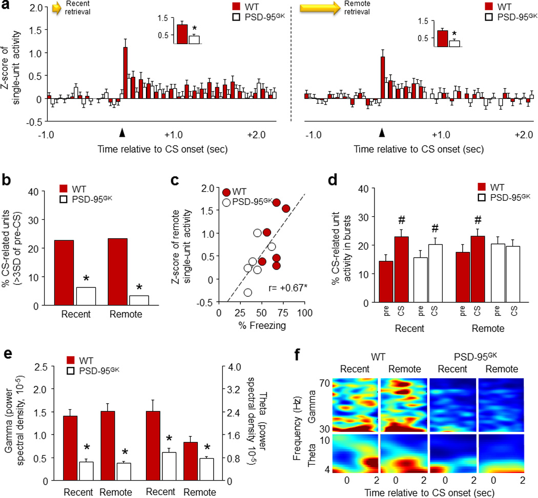 PSD-95 deletion disrupts CS-related single-unit activity in the infralimbic cortex during fear memory retrieval ( a ) PSD-95 GK mice showed less CS-related IL single-unit activity than WT controls during recent (left panel) and remote (right panel) fear memory retrieval. Insets show first 100 millisecond timebins. ( b ) PSD-95 GK mice had fewer phasic CS-related IL single-units than WT controls during recent and remote retrieval. ( c ) IL single-unit activity correlated positively with freezing during remote retrieval. ( d ) IL single-unit burst activity increased during the CS in both genotypes during recent retrieval, but only in WT mice during remote retrieval. ( e ) PSD-95 GK mice showed lower gamma and theta oscillations than WT controls, on recent and remote retrievals. ( f ) Representative perievent spectrograms showing the gamma and theta frequency spectra around CS-onset. For gamma panels, darkest blue=0 mV 2 *s and darkest red=2e −5 . For theta panels, darkest blue=0 and darkest red=4e −4 mV 2 *s. Data are means ±SEM. n=6 mice per genotype, n=74–87 single-units per genotype. * P