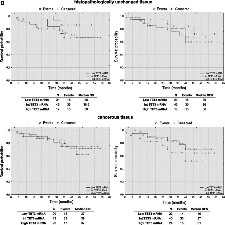 The Kaplan–Meier survival analysis among patients with colorectal cancer according to the TET1 mRNA level ( a ), TET1 DNA methylation ( b ), TET2 ( c ) and TET3 ( d ) mRNA level. Patients were subdivided into three groups: low, intermediate, and high for each TET1, TET2 and TET3 transcript levels in histopathologically unchanged and cancerous tissue or DNA methylation absent/present in TET1 promoter in cancerous tissue. p values for overall survival (OS) and disease-free survival (DFS) were determined with the log rank test and given only for significant results. n , number of patients