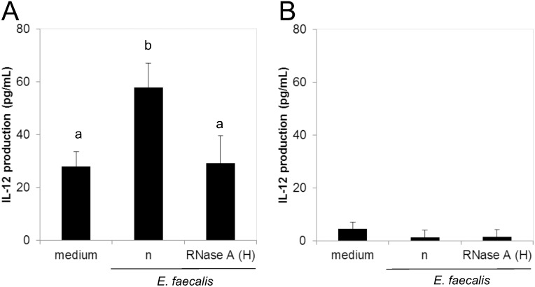 IL-12 production from human (A) monocytes and (B) monocyte-depleted PBMCs against  E .  faecalis  EC-12. Heat-killed  E .  faecalis  EC-12 was treated with or without RNase A in high salt buffer and co-cultured with  (A)  monocytes or  (B)  monocyte-depleted PBMCs for 24 h. The IL-12 protein concentration in the culture supernatant was measured by enzyme-linked immunosorbent assay. Bars sharing the same letter are not significantly different at P