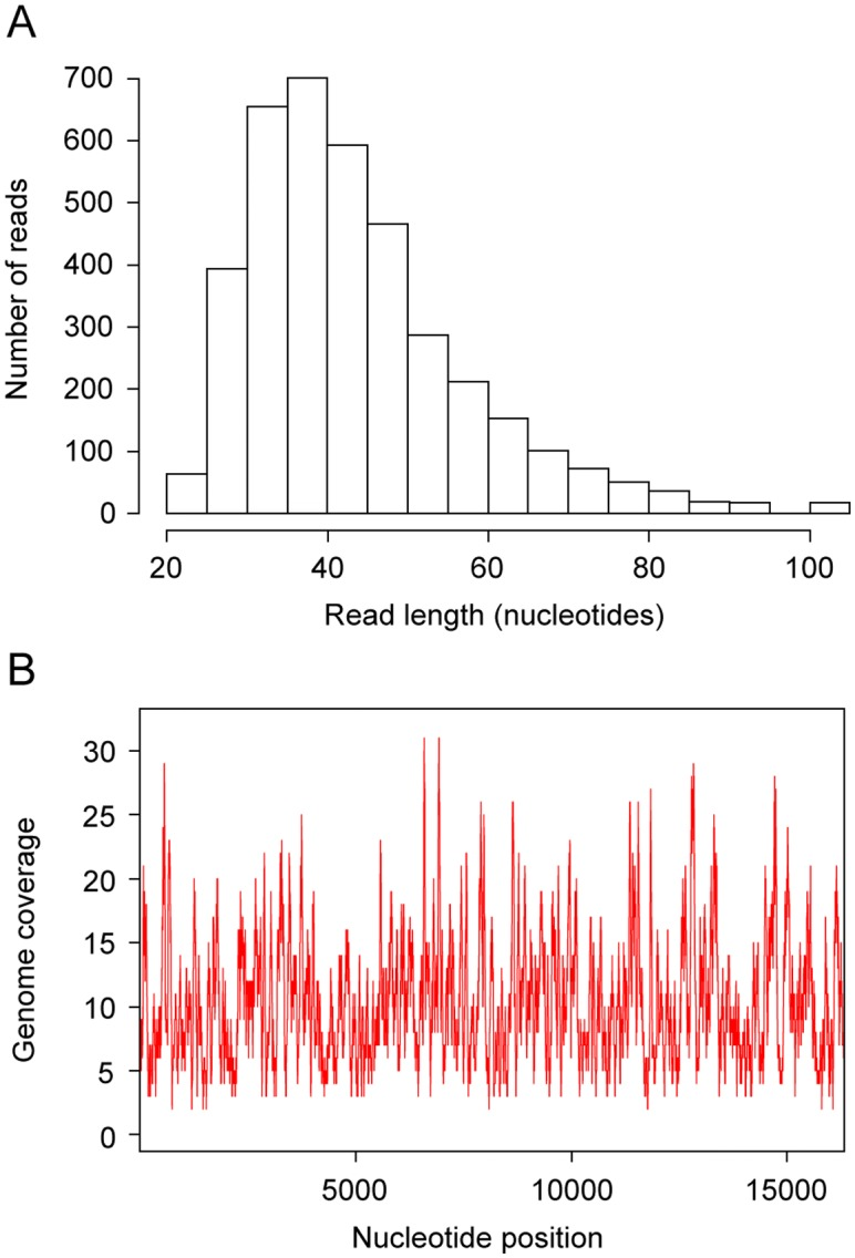 Characteristics of the sequences used to assemble the Bison priscus mitochondrial genome. (A) Size distribution of the 3,851 unique Illumina reads. (B) Coverage for each position of the <t>SGE2seq</t> sequence obtained by merging the sequences of Illumina reads and <t>PCR</t> fragments.
