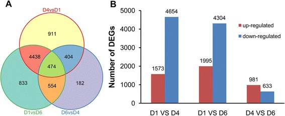 Gene expression comparisons.  a  Venn diagram of number of DEGs. Genes in overlapping sets show the differential expression in two or three comparison pairs.  b  Changes in gene expression profile. The numbers of up-regulated and down-regulated genes between D1 and D4, D1 and D6, D4 and D6 are summarized