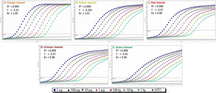 Multiplex TaqMan qPCR sensitivity assay. Assay was performed with 10-fold serially diluted multi target artificial positive control (APC) from 1 ng to 1 fg using primer and probe sets (A) ObsCo12F/12R/12P (72 bp), (B) BruCo5F/5R/5P (140 bp), (C) BosCo8F/8R/8P (96 bp), (D) PeaCo14F/14R/14P (67 bp), and (E) DecCo11F/11R/11P (99 bp). Different channels viz . orange, yellow, red, crimson and green corresponding to the different reporter dye (excitation/emission spectra in nm) viz . 6-ROXN (575/602), HEX (535/554), Cy5 (647/667) and Quasar705 (690/705) and 6-FAM (495/520), respectively.