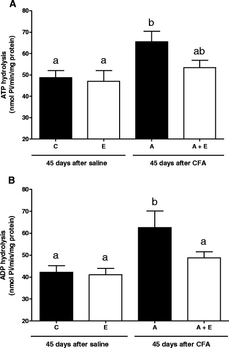 ATP ( a ) and ADP ( b ) hydrolysis in lymphocytes of Complete Freund's Adjuvant (CFA)- induced arthritis rats and treated for 45 days with Uncaria tomentosa extract in the dose of 150 mg/kg, 2 times/day. Enzyme specific activities are reported as nmol of Pi released/min/mg of protein. Groups: C (control), E (extract), A (arthritis) and A + E (arthritis + extract). Bars represent mean ± S.E.M. ( a,b ) Indicates a significant P