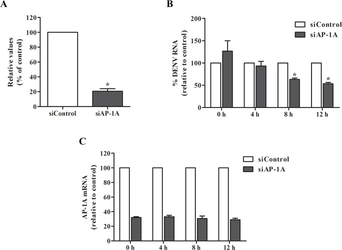 Silencing of AP-1A reduced DENV RNA level. (A) DENV RNA level was measured by real-time RT-PCR at 24 h post-infection. (B) Kinetics of DENV RNA expression were determined by real-time RT-PCR. Relative expression of DENV RNA in AP-1A knockdown cells was compared with control cells. (C) Knockdown efficiency of AP-1A siRNA was examined by real-time RT-PCR. The results were plotted relative to cells transfected with control siRNA. Statistical significance was analyzed using the unpaired t test (*P