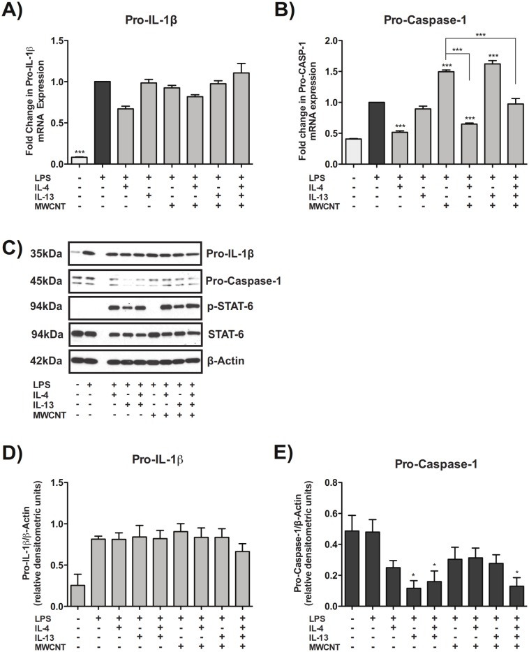 Th2 cytokines suppress pro-caspase-1 without affecting levels of pro-IL-1β. (A) Taqman quantitative RT-PCR results showing mRNA expression of pro-IL-1β in THP-1s exposed to 100 μg/mL MWCNTs with IL-4, IL-13, or IL-4 and IL-13 co-treatment. B) Taqman qRT-PCR results showing mRNA levels of pro-caspase-1 in THP-1s exposed to MWCNTs with IL-4, IL-13, or IL-4 and IL-13 co-treatment. Statistical analysis was performed using a one-way ANOVA with a post hoc Tukey. ***P
