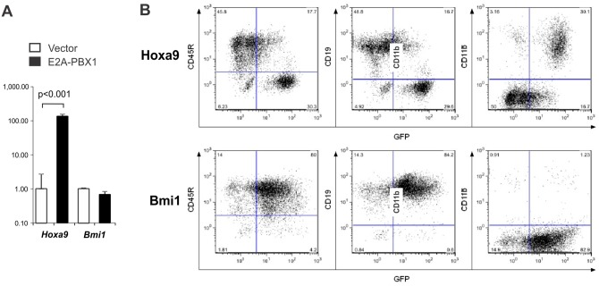 Ectopic expression of Hoxa9 , but not Bmi1 , in fetal liver progenitors antagonizes B-lymphoid differentiation. (A) Analysis by qRT-PCR of Hoxa9 and Bmi1 gene expression in E2A-PBX1- versus vector-infected FLPs. Values for each gene are expressed relative to expression in vector-infected cells. (B) Immunophenotype of FLPs transduced with Hoxa9 - versus Bmi1 -expressing retroviruses. Lin - FLPs were transduced with retroviruses expressing Bmi1 or Hoxa9 and then cultured under B-lymphoid conditions. Cells were analyzed by flow cytometry on day 14 post-infection.