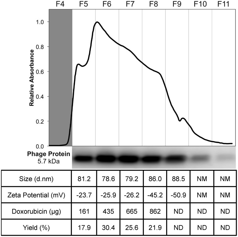 Purification and characterization of DMPGTVLP-modified Lipodox . Size exclusion chromatography of modified Lipodox on a Superose 6 column (30 × 1 cm), 2.5 mL/fractions 4–11 of the elution profile are shown. Western blot of recovered fractions probed with a polyclonal anti-fd rabbit primary IgG, followed by a biotinylated goat anti-rabbit secondary IgG and detected with NeutrAvadin-HRP and Pico West luminol substrate. Physicochemical characterization of recovered fractions for size distribution (d.nm), zeta potential (mV), doxorubicin recovery (μg), and percent doxorubicin recovery (%).