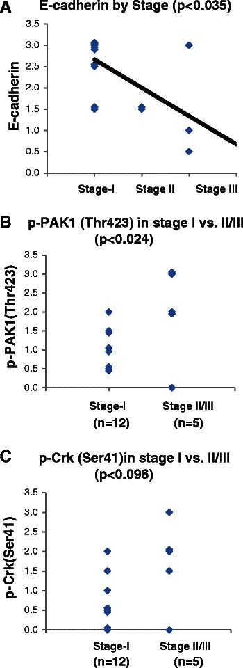 <t>PAK1</t> activation is correlated with tumor stage at presentation. A -Dot plot demonstrating the expression of E-cadherin in the examined tumors in relation to the surgical stage of each tumor. The correlation between variables were examined by Spearman Rank Correlation analysis. B - Dot plot demonstrating the expression of p-PAK1(Thr423) in stage I and stage II/III tumors. The mean between groups was compared by student T-test. C - Dot plot demonstrating the expression of p-Crk-II(Ser41) in stage I and stage II/III tumors. The mean between groups was compared by student T-test.