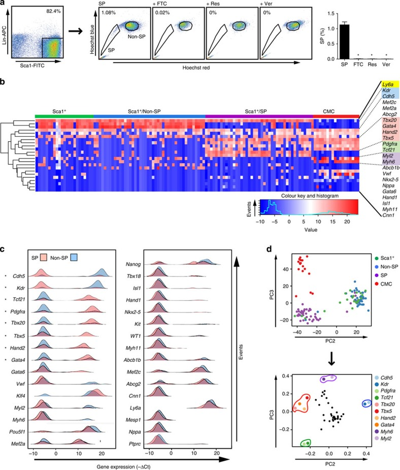 Single-cell profiles map cardiogenic gene expression to Sca1 + SP cells co-expressing Pdgfra. ( a ) Left, flow sorting of fresh cardiac Lin − Sca1 + cells after immunomagnetic enrichment for Sca1. Center, further purification of Lin − Sca1 + cells for the SP phenotype by Hoechst 33324 staining±ABC transporter inhibitors: FTC, fumitremorgin C; Res, reserpine; Ver, verapamil. Right, bar graph, mean±s.e.m.; n =4; * P ≤0.0001. ( b ) Single-cell <t>qRT–PCR</t> profiles of fresh total Sca1 + , SP and non-SP cells, compared with cardiomyocytes (CMC). The heatmap illustrates expression as −ΔCt values (blue, low or absent; red, high) and hierarchical clustering reveals the co-expression of functionally related genes in the populations indicated. Highlighted are: yellow, the Sca1 gene Ly6a ; blue, Kdr and Cdh5 , enriched in Sca1 + and non-SP cells; red, cardiogenic transcription factors, enriched in SP cells and CMC; green, Pdgfra and Tcf21 , enriched in SP cells; violet, CMC genes. Sca1 + , n =23; non-SP, n =44; SP, n =43; CMC, n =18. For the full set of 44 genes, see Supplementary Fig. 1 . ( c ) Density plots of expression (−ΔCt) for selected genes in SP (light red) versus non-SP (light blue) cell populations. Genes are ordered according to increasing P -values. Those with a significantly divergent prevalence of expression between SP and non-SP cells are indicated by an asterisk. ( d ) PCA of the single-cell expression profiles. (Top) PC2 (19% variability) separates SP from non-SP sample scores, whereas PC3 (9% variability) establishes a distinct separation between SP/non-SP/Sca1 + cells and CMC. Non-SP and unfractionated Sca1 + cells cluster together in the PC projection. (Bottom) Gene loadings contributing to each PC indicate that a small subset of genes explain the cross-group variability captured by PC2 and PC3. Cdh5 and Kdr are predominantly associated with non-SP and unfractionated Sca1 + cells, while Pdgfra and Tcf21 are correlated with SP cells (as given by PC2). Di