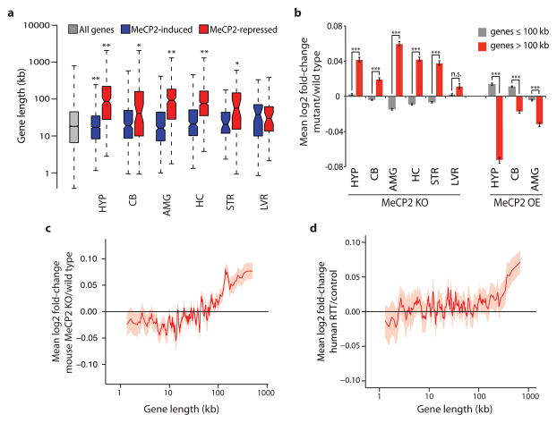 Length-dependent gene misregulation in Mecp2 mutant mice and human RTT brain a, Boxplots summarizing lengths of genes (Refseq transcription start site to termination site) detected as misregulated in independent studies of Mecp2 mutant mice. HYP, hypothalamus 5 ; CB, cerebellum 6 ; AMG, amygdala 7 ; HC, hippocampus 8 ; STR, striatum 9 ; LVR, liver 9 . MeCP2-induced (blue), genes down-regulated in MeCP2 knockout (MeCP2 KO) and up-regulated in MeCP2 overexpression (MeCP2 OE) mice. MeCP2-repressed (red), genes up-regulated in MeCP2 KO and down-regulated in MeCP2 OE (see Methods). b , Mean expression changes across brain regions and liver of Mecp2 mutant mice for genes ≤100 kb (gray) and > 100 kb (red). c–d, Genome-wide changes in gene expression assessed by RNA-seq analysis of mouse cortical tissue from MeCP2 KO compared to wild type ( c ) or microarray analysis of human RTT brain samples compared to age-matched controls 16 ( d ). In c, d lines represent mean fold-change in expression for genes binned according to gene length (200 gene bins, 40 gene step; see Methods); the ribbon is S.E.M. of each bin. *, p