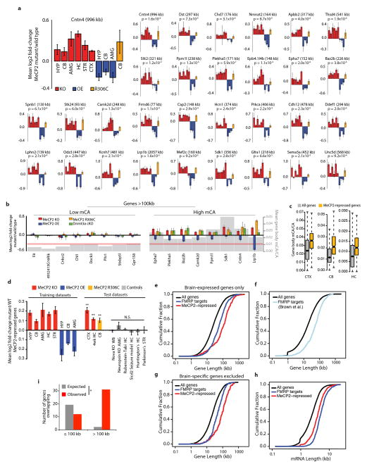 """Analysis of MeCP2-repressed genes and FMRP target genes a, Mean fold-change in mRNA expression for examples of MeCP2-repressed genes across three different Mecp2 mutant genotypes (KO, OE, and R306C) and six brain regions. p-values for each gene are derived from the mean z -scores for fold-change across all datasets (see Methods). b , Gene expression and CA methylation data from the cerebellum for selected MeCP2-repressed genes from a (right), as well as examples of extremely long genes ( > 100kb) that are not enriched for mCA and are not misregulated (left). Fold-changes in mRNA expression in Mecp2 mutants and the Dnmt3a cKO are shown (left axis), as well as mean mCA levels (gray; right axis). Red line indicates genomic median for gene body mCA/CA c, Boxplots of mCA levels in MeCP2-repressed genes compared to all genes. d, Mean fold-change for MeCP2-repressed genes in eight """"training datasets"""" used to define these genes (see Methods), and nine """"test datasets"""": three Mecp2 mutant datasets not used to define MeCP2-repressed genes (CTX MeCP2 KO and CB MeCP2 R306C, generated in this study; HC MeCP2 KO 4wk, analyzed from Baker et al. 8 ), and six datasets from brains of mouse models of neurological dysfunction generated using the same microarray platforms as the MeCP2 datasets (Geo accession # in order: GSE22115, GSE27088, GSE43051, GSE47706, GSE44855, GSE52584). Error bars are SEM of MeCP2–repressed gene expression across samples (n=4–8 microarrays per genotype per dataset); ** p"""
