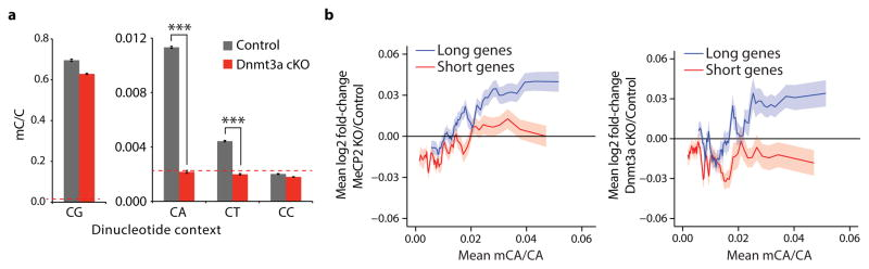 Disruption of Dnmt3a in the brain leads to length-dependent up-regulation of genes containing high levels of mCA a, Summary of genome-wide bisulfite-sequencing analysis of mCN (where N = G, A, T, or C) in control and Dnmt3a cKO cerebella ( n =2 per genotype). Dashed line represents mean background non-conversion rate of the bisulfite-seq assay (see Methods). b, Mean fold-change in gene expression versus gene-body mCA for MeCP2 KO (left) or Dnmt3a cKO (right) cerebella. Long (top 25%, > 60kb) and short (bottom 25%,