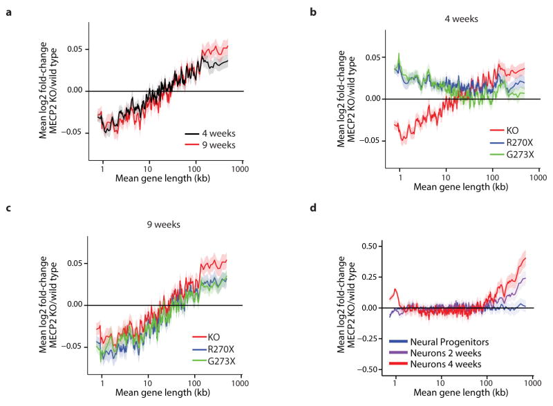 Timing and severity of gene expression changes in models of RTT a, Mean fold-change in gene expression versus gene length in the hippocampus of MeCP2 KO mice compared to wild type at four and nine weeks of age reveals increasing magnitude of length-dependent gene misregulation that parallels the onset of RTT-like symptoms in these animals 8 . b , Mean fold-change in gene expression versus gene length in hippocampus of mice expressing truncated forms of MeCP2 mimicking human disease-causing alleles at four weeks of age. Re-expression of a longer truncated form of MeCP2 (G273X) in the MeCP2 KO normalizes expression of long genes more effectively than expression of a shorter truncation of MeCP2 (R270X), and parallels the higher degree of phenotypic rescue observed in MeCP2 G273X-expressing mice compared to MeCP2 R270X-expressing mice 8 . c , Mean fold-change in gene expression versus gene length in hippocampus of mice expressing truncated MeCP2 at nine weeks of age. Consistent with the eventual onset of symptoms of these mouse strains, length-dependent gene misregulation is evident in both strains. d , Changes in gene expression for genes binned by length in human MECP2 null ES cells differentiated into neural progenitor cells, neurons cultured for 2 weeks, or neurons cultured for 4 weeks 15 . In all plots, lines represent mean fold-change in expression for each bin (200 gene bins, 40 gene step), and the ribbon is S.E.M. of genes within each bin.