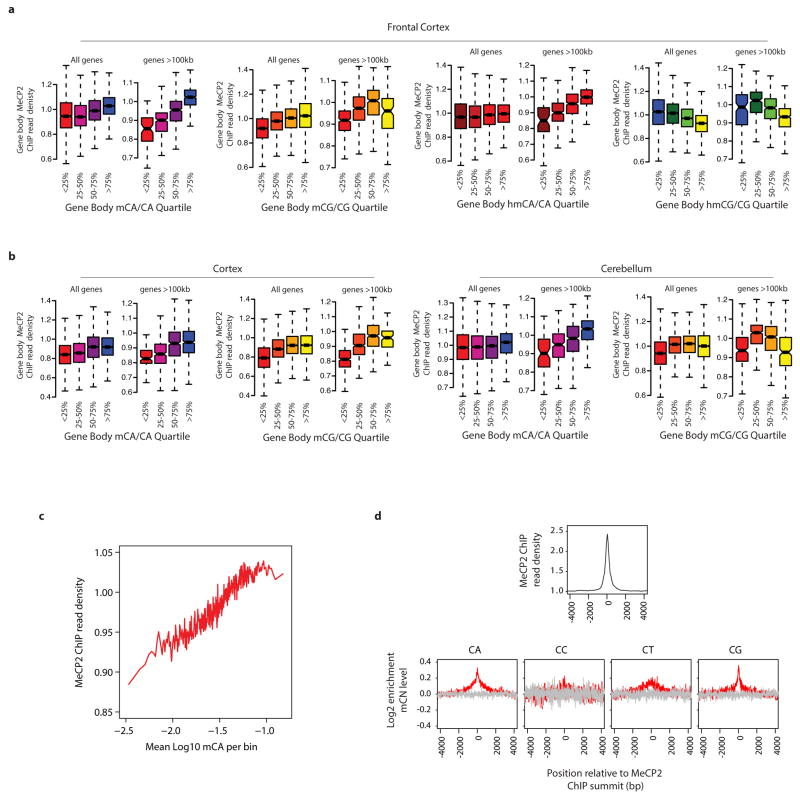 ChIP-seq analysis of MeCP2 binding in vivo a, Boxplots of input-normalized read density within gene bodies (TSS +3 kb to TTS) for MeCP2 ChIP from the mouse frontal cortex plotted for genes according to quartile of mCA/CA, mCG/CG, hmCA/CA and hmCG/CG in the frontal cortex 24 for all genes and genes > 100 kb. b, Similar analysis of MeCP2 ChIP from the mouse cortex (left) or cerebellum (right) plotted for genes according to quartile of mCA/CA or mCG/CG for all genes and genes > 100 kb. MeCP2 ChIP-signal is correlated with mCA/CA levels from the frontal cortex, cortex, and cerebellum for all genes and this correlation is more prominent among genes > 100 kb. mCG does not show as prominent a correlation with MeCP2 ChIP signal, and hmCG trends toward anti-correlation with MeCP2 ChIP. These results suggest that MeCP2 has a lower affinity for hmCG than mCG, suggesting that, in vivo, hmCG is associated with reduced MeCP2 occupancy ( Supplementary Discussion ). c , High resolution analysis of high-coverage bisulfite sequencing data from the frontal cortex showing a correlation between MeCP2 ChIP signal and mCA. Input-normalized ChIP signal plotted for mCA levels for 500 bp bins tiled across all genes. d , Aggregate plots of MeCP2 input-normalized ChIP signal (top) and relative methylation (log2 enrichment in mC as compared to the flanking regions) for mCA, mCC, mCT, and mCG (bottom) are plotted around the 31,479 summits of MeCP2 ChIP enrichment identified using the MACS peak-calling algorithm 40 (red) or 31,479 randomly selected control sites (gray, see Methods).