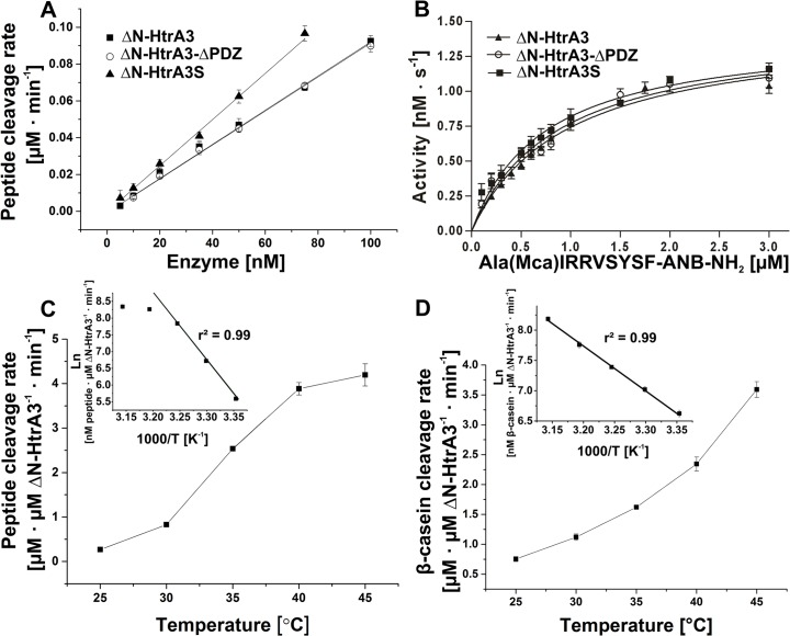 Effect of the PDZ domain upon ΔN-HtrA3 proteolytic activity. (A) Rates of cleavage of the peptide Ala(Mca)IRRVSYSF-ANB-NH 2  (5 μM) by ΔN-HtrA3, ΔN-HtrA3-ΔPDZ, and ΔN-HtrA3S at increasing enzyme concentrations at 30°C. (B) Concentration dependence of the rate of peptide cleavage by ΔN-HtrA3, ΔN-HtrA3-ΔPDZ and ΔN-HtrA3S (50 nM) at 30°C. The data were fitted to the Michaelis-Menten equation using GraphPad Prism 5. (C) The temperature dependence of ΔN-HtrA3 activity, assayed with saturating amount of peptide (5 μM). (D) Temperature dependence of ΔN-HtrA3 activity, assayed with β-casein. The insets in C and D show Arrhenius plots of the same data. The data were fitted by linear regression using OriginPro 9.1 software. ΔN-HtrA3 concentrations were calculated for monomers. Error bars are averages +/ SD ( n  = 3).